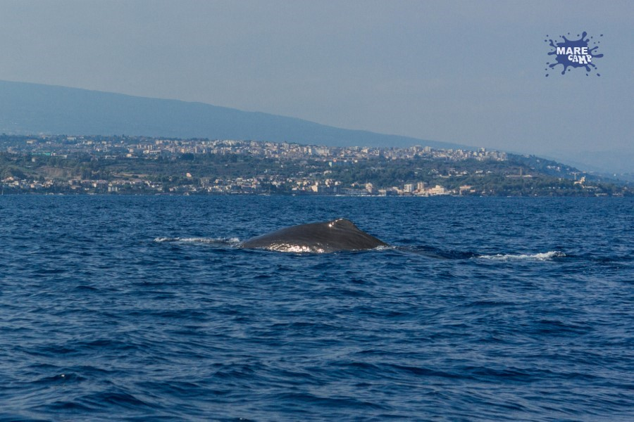 Capodoglio Marecamp whale watching 2