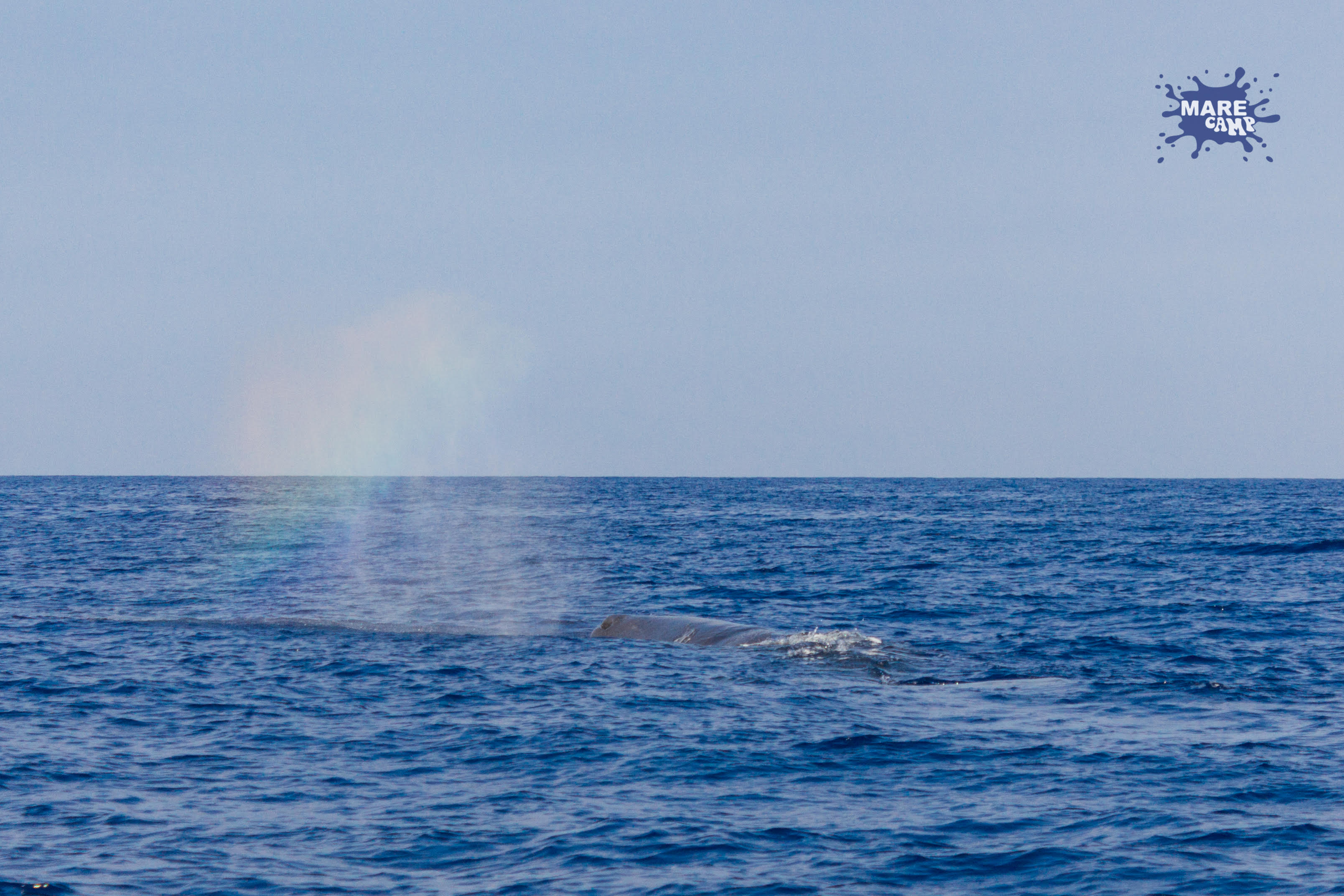 Capodoglio Marecamp whale watching 3