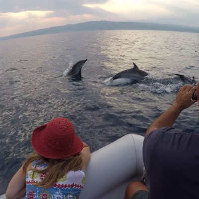Osservazione delfini - Dolphin watching - Observation des dauphins